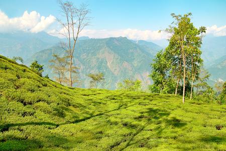 A világ teatermesztő országai - India 2.  Darjeeling