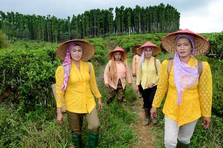 A világ teatermesztő országai - 7. IndonéziaTea szedők az ültetvényen a Lumajang tartomány, Kelet-Jáva, Indonézia