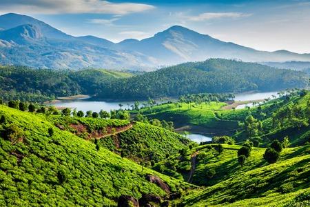Darjeelingi teaültetvények